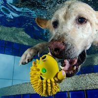 บริการถ่ายภาพน้องหมาใต้น้ำ service photograph underwater dogs