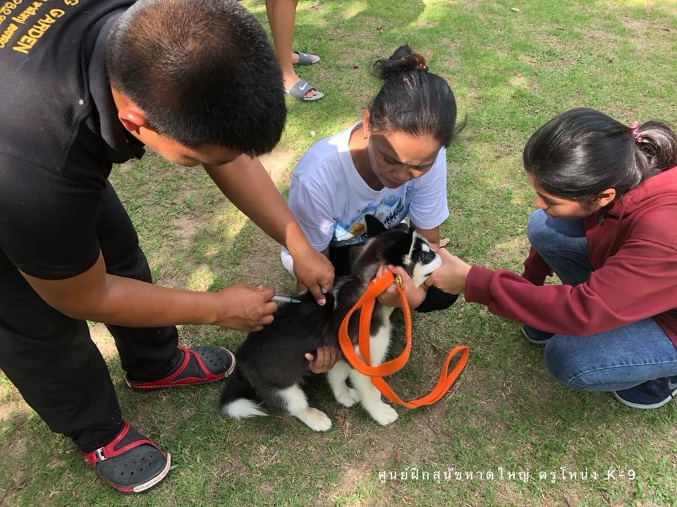 ศูนย์ฝึกสุนัข