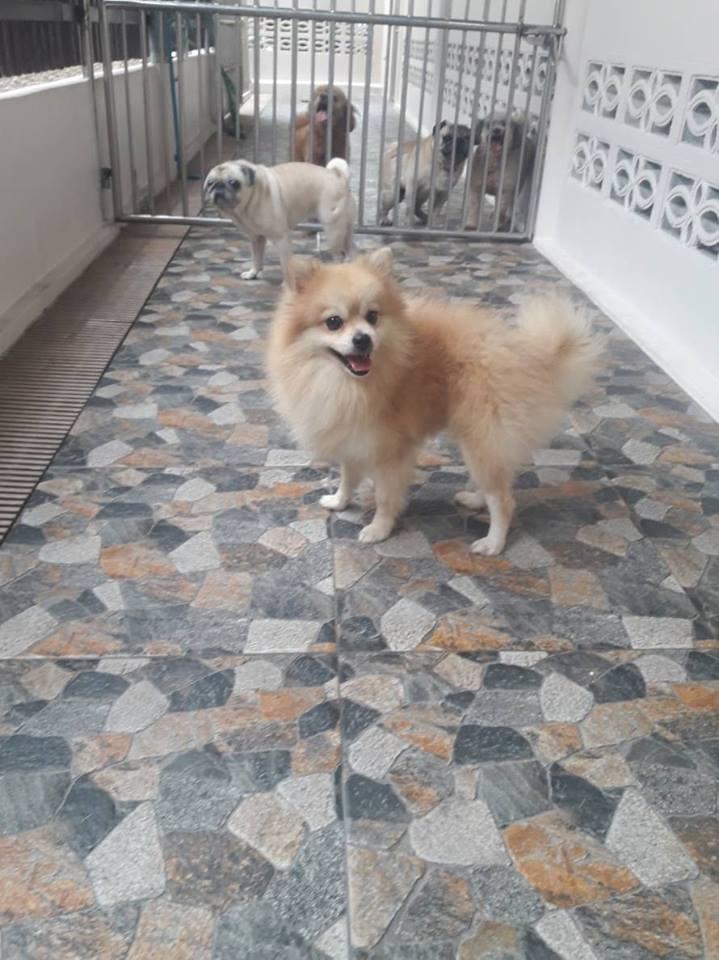 สปาและรีสอร์ทสำหรับสุนัข
