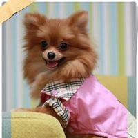 สินค้าและบริการเพื่อสุนัขของร้าน Puppy Fashion | 0830657675