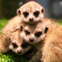 The Pet Village - หมู่บ้านสัตว์เลี้ยง ให้คำปรึกษาเกี่ยวกับสัตว์  | 094 308 8229