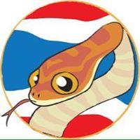 Thai corn snake จำหน่ายงูคอร์น หนูแช่แข็ง และอุปกรณ์การเลี้ยง 084-494-9992