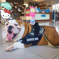Lucky Pet shop จำหน่ายอุปกรณ์สัตว์เลี้ยง