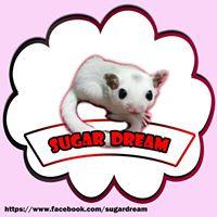 Sugar Dream ซื้อ ขาย ชูก้าไกรเดอร์ และอุปกรณ์สัตว์เลี้ยง